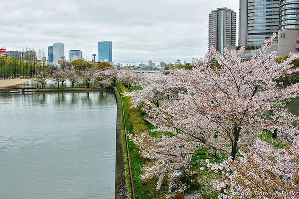 桜宮神社と後ろに聳え立つマンション
